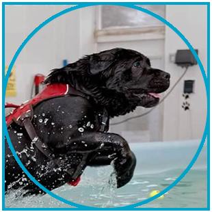 Aqua Dogs